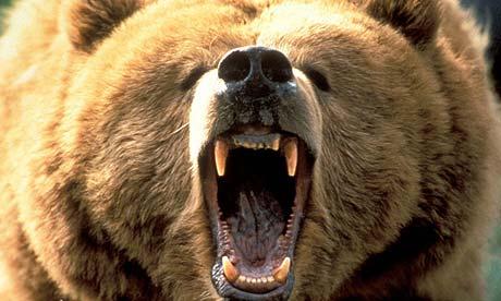 angry%20bear